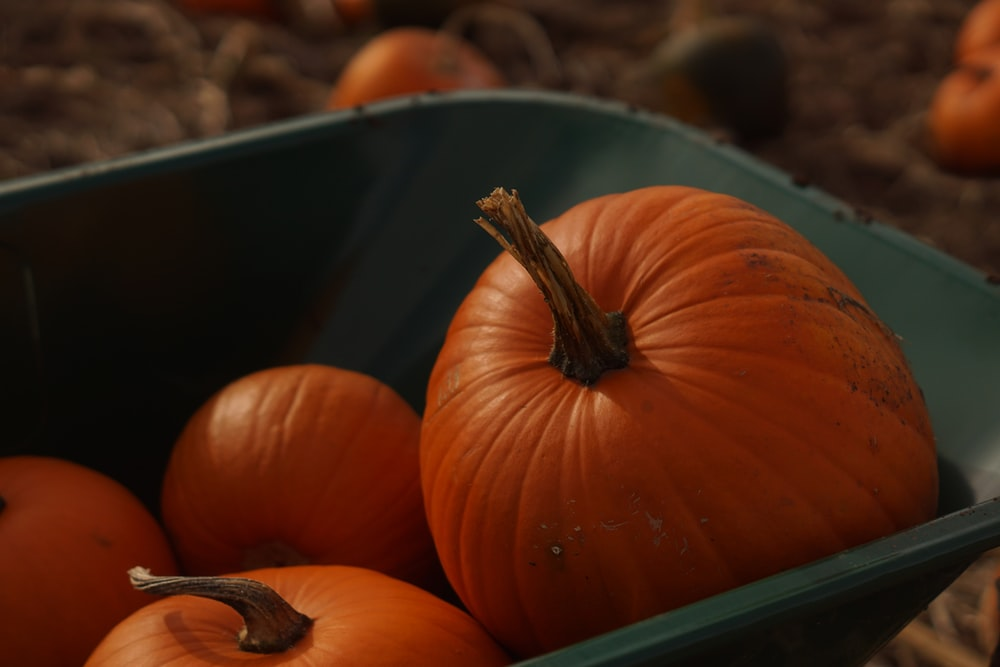 orange and black pumpkin and orange pumpkin