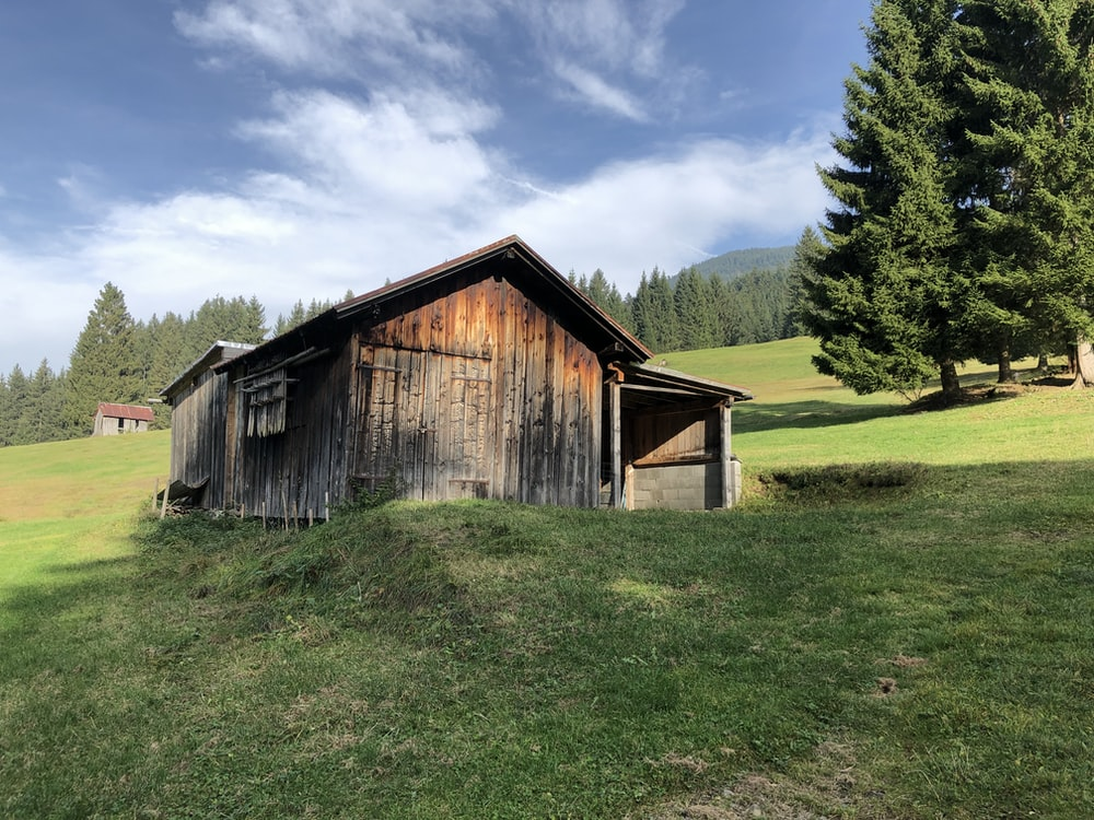 cabin near green trees