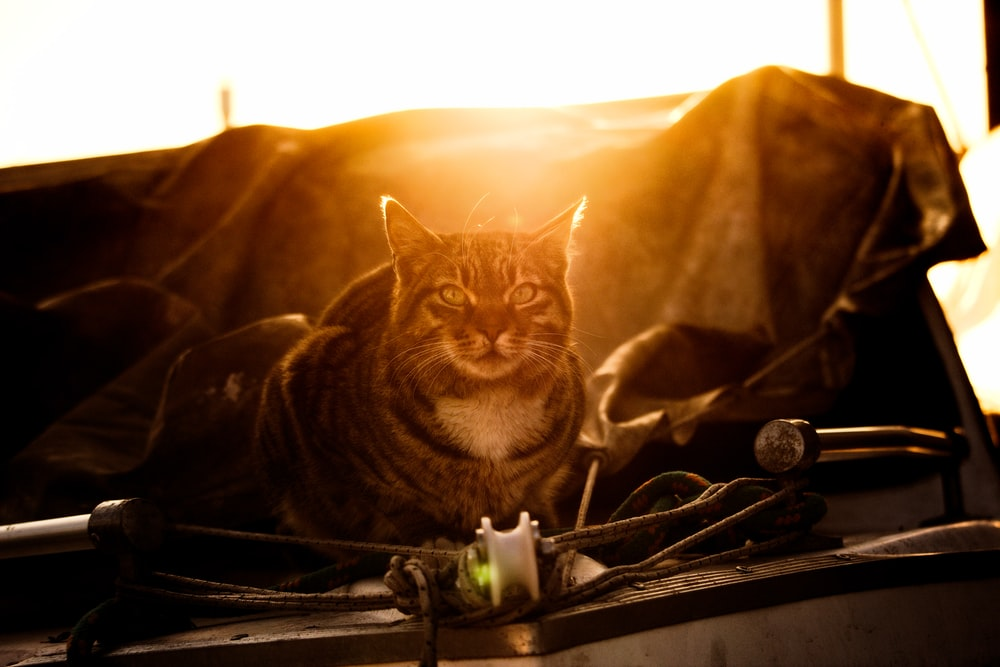 brown tabby cat at the yacht