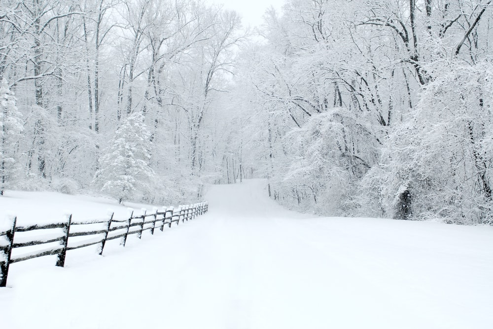 snow covered trees beside fence
