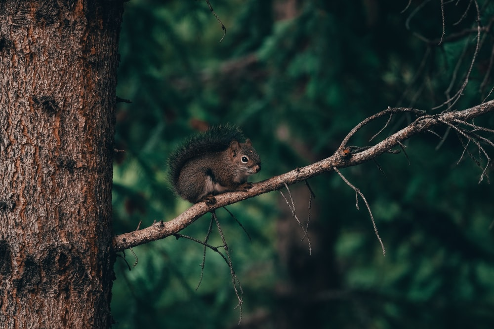 selective focus photography of squirrel on branch