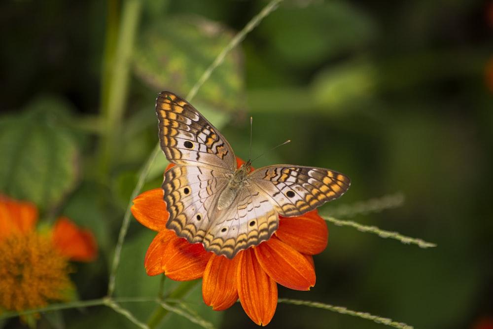 brown moth on orange petaled flower