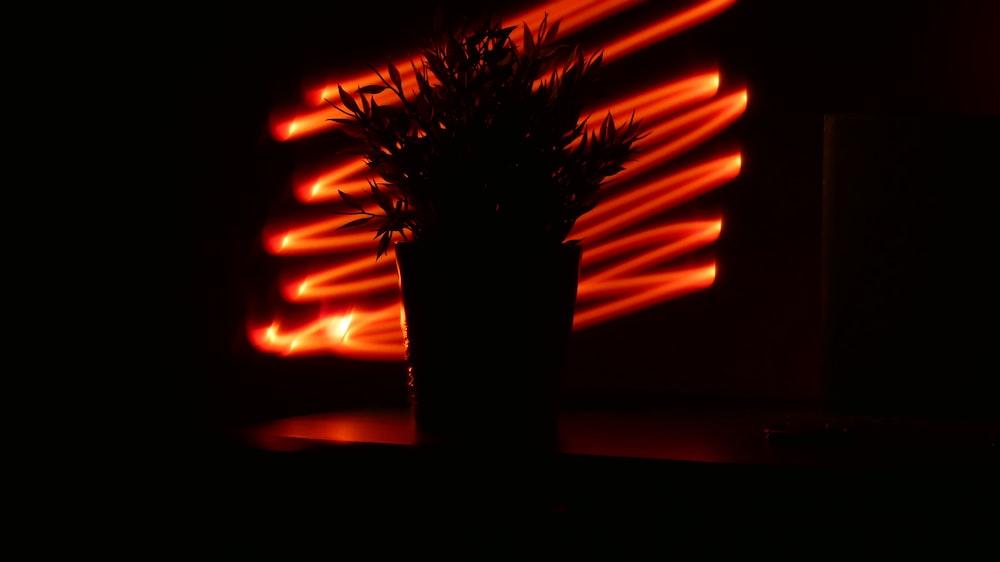 photography of plant near lighted orange inside room