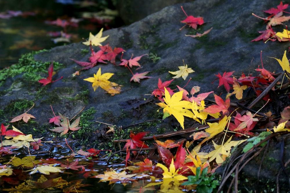 fallen leaves on rock beside body of water