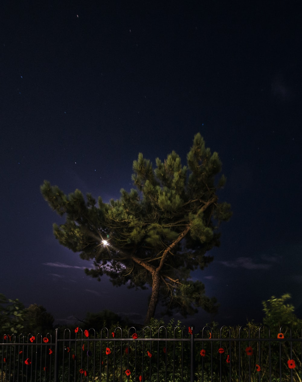 green tree during nighttime