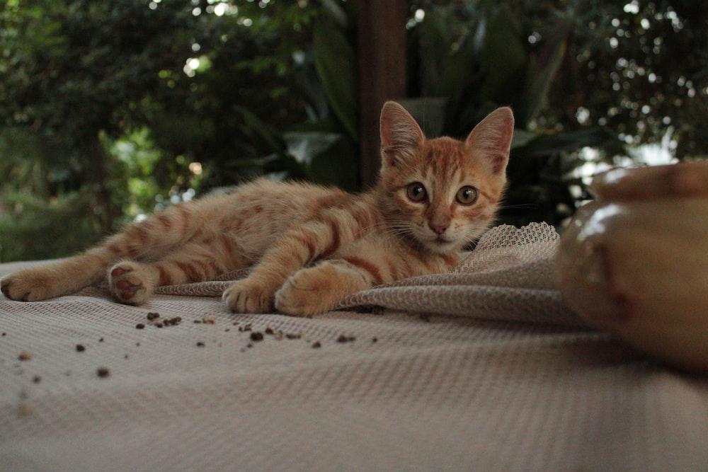orange tabby kitten lying on gray apparel