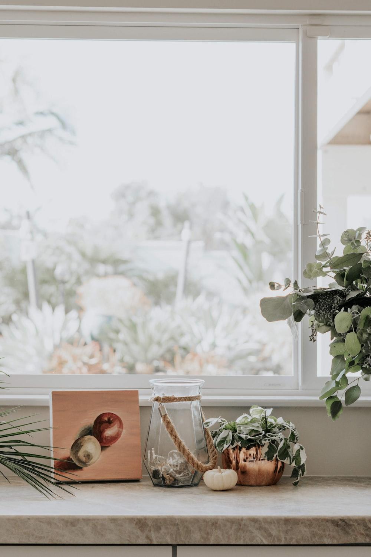 shallow focus photo of green plants beside window