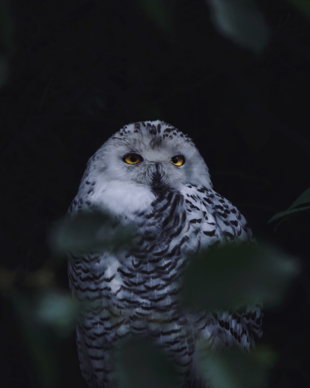 gray and white owl on tree