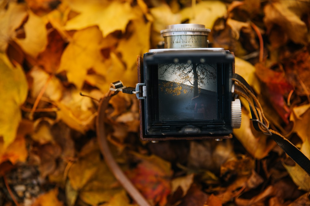 square black and grey camera on brown leaves