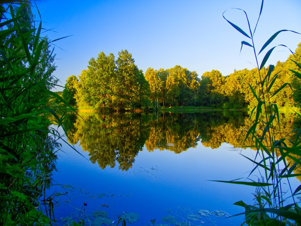 reflection of trees on body of water underblue sky