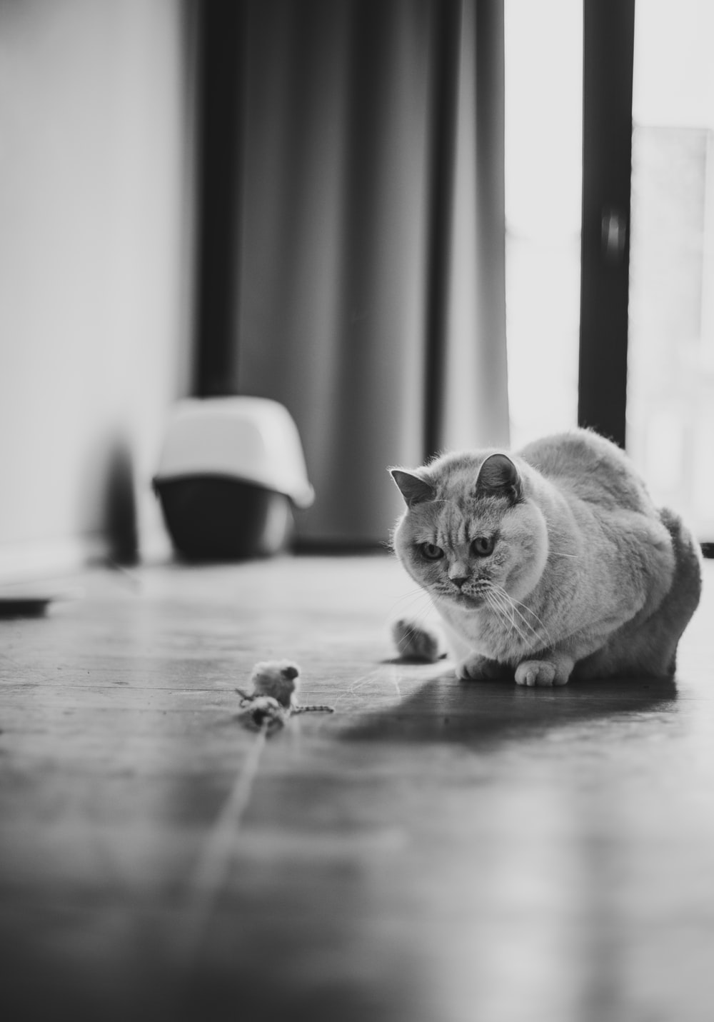 grayscale photography of cat inside room