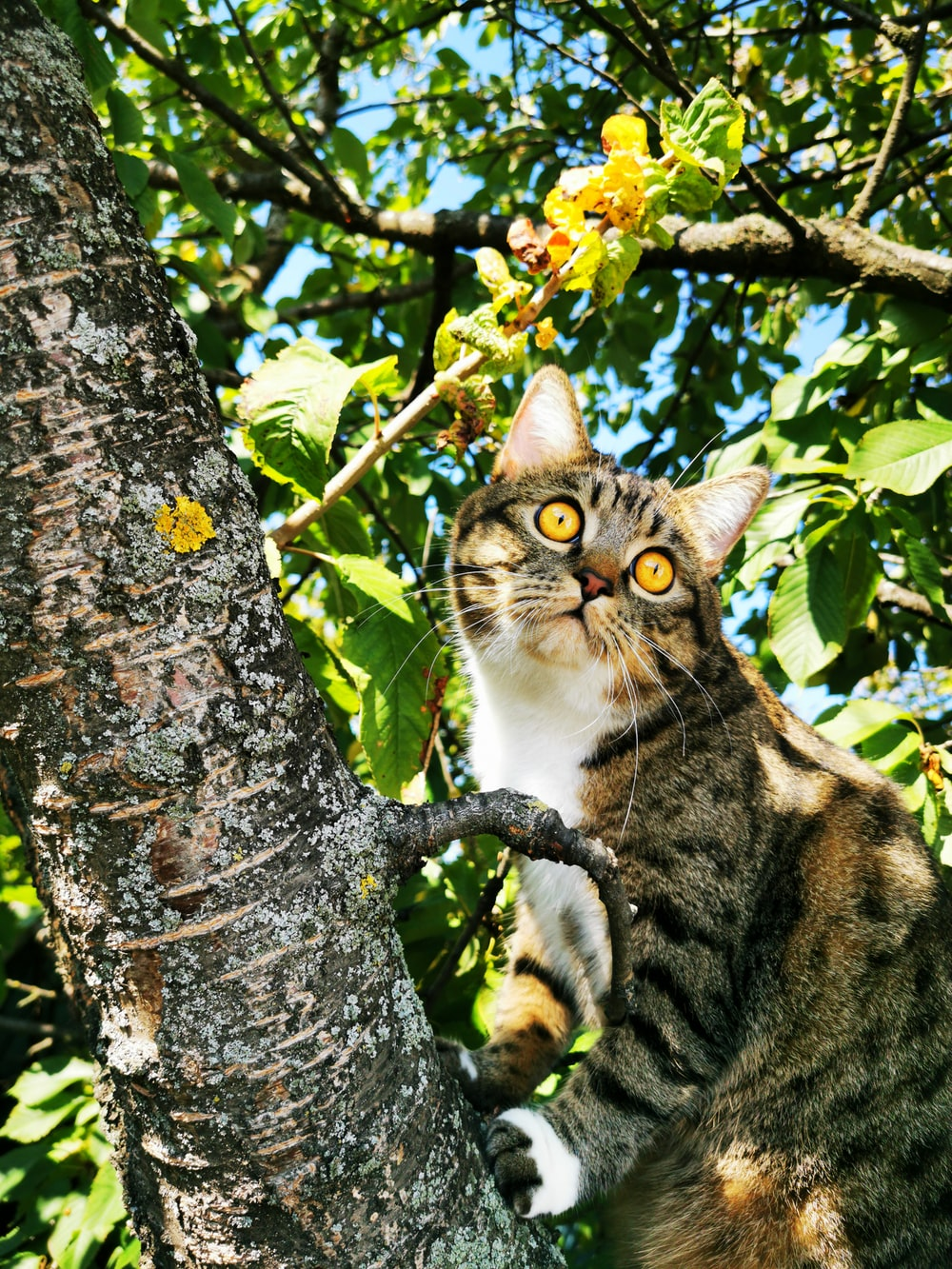 brown tabby cat on green tree
