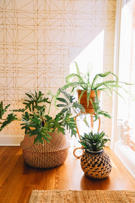 pots of green plants beside wall