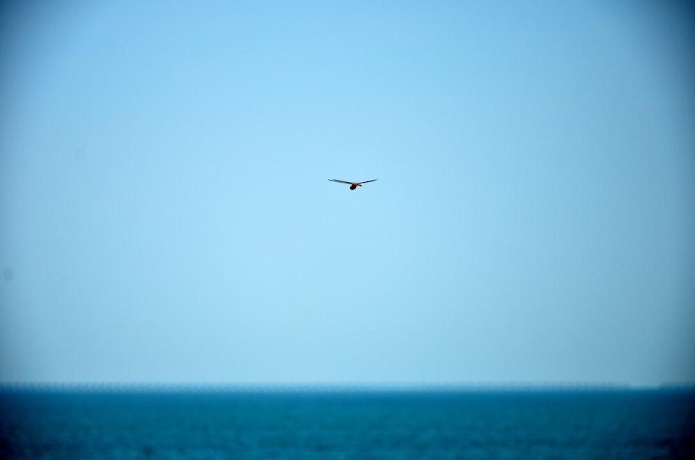 bird on flight