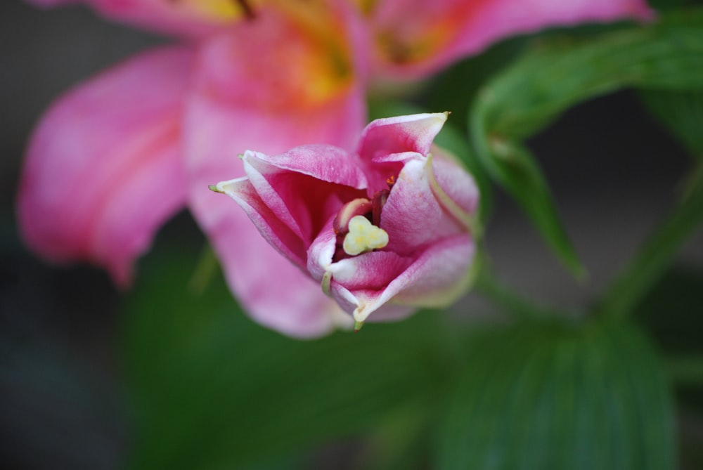 pink flower during daytime