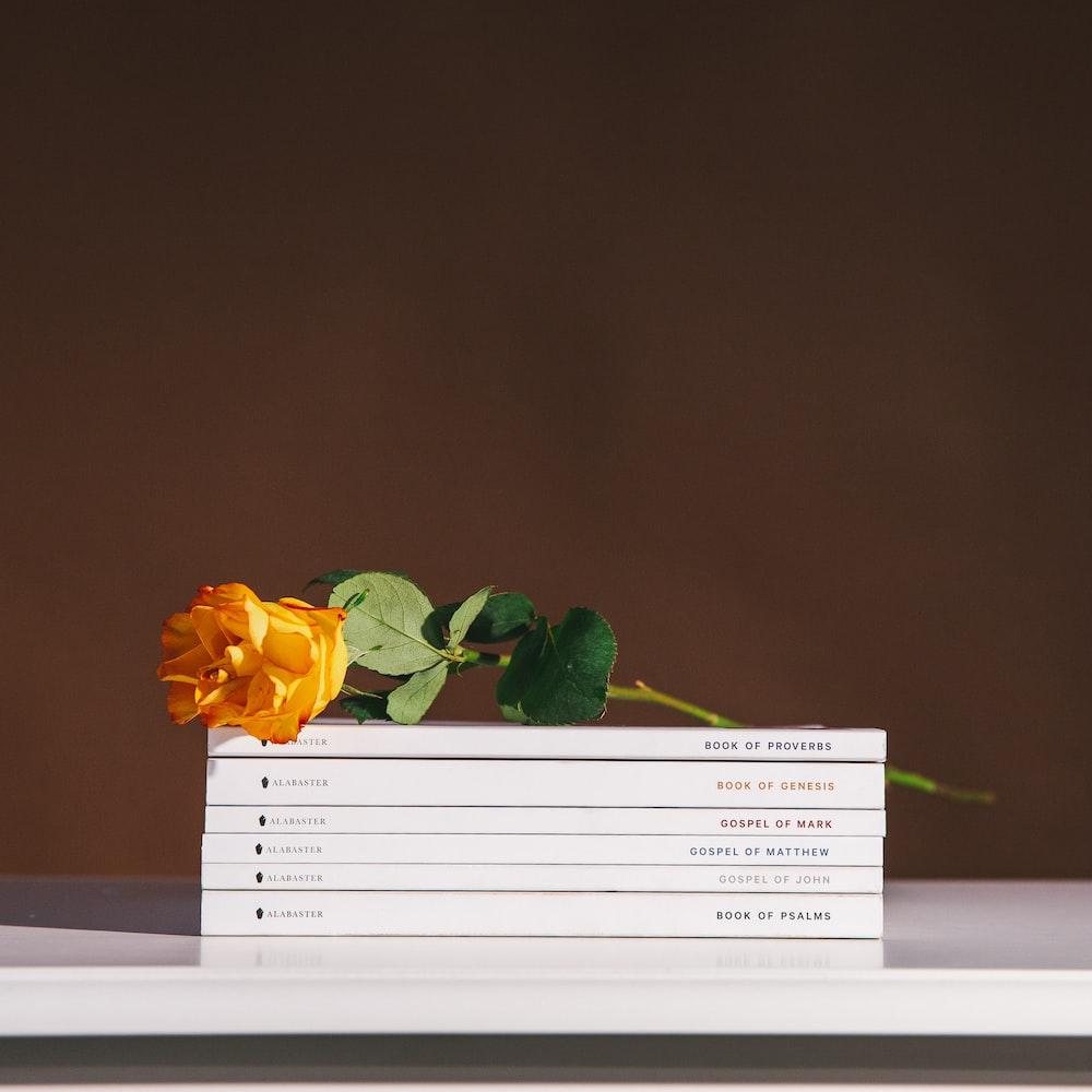 yellow rose on books