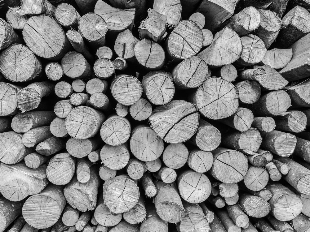 grayscale photography pile of firewood