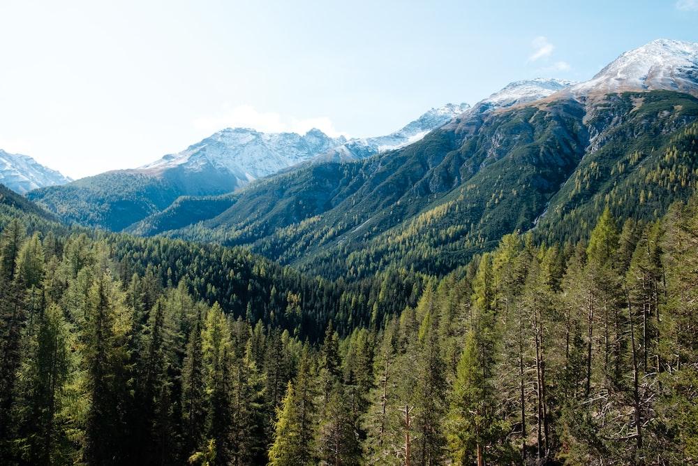 aerial photo of trees on mountain