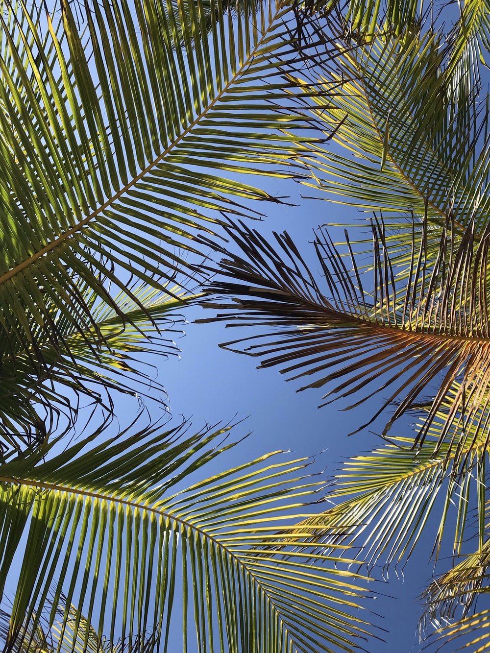 low angle photo of green coconut tree leaves during daytime