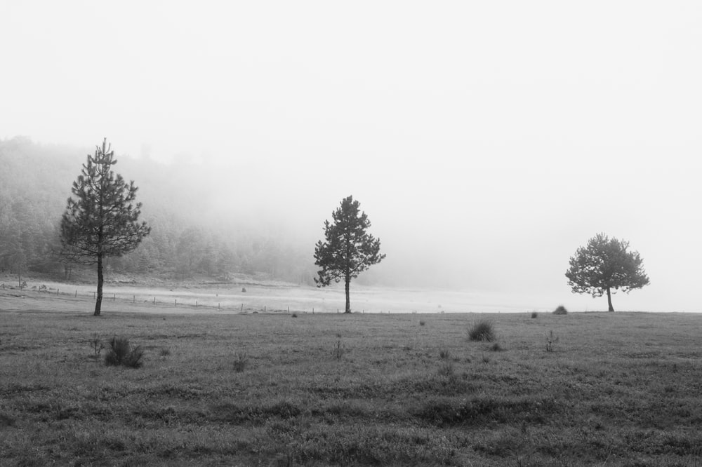 grayscale photography of three trees