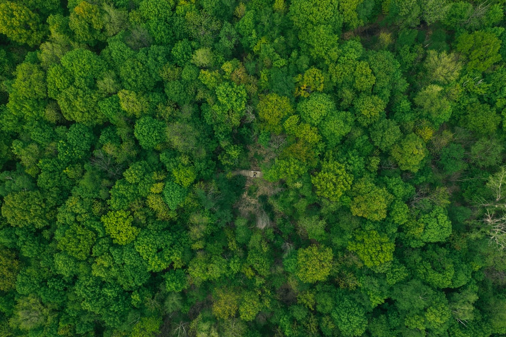 aerial photography of forest with tall green trees during daytime