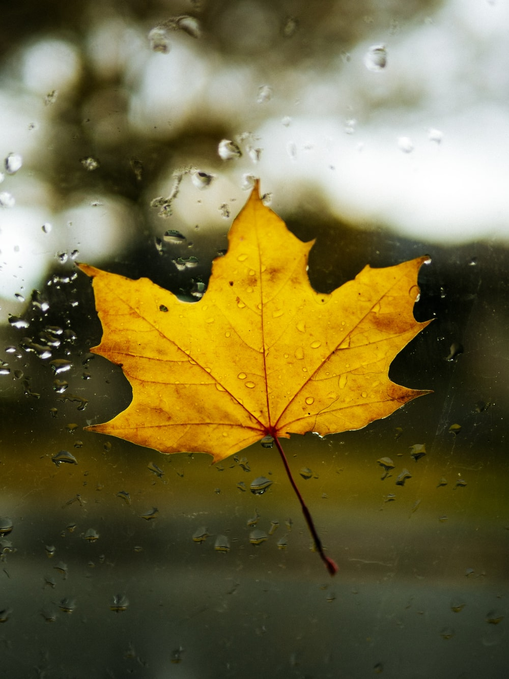 brown leaf on clear glass