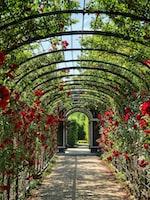 Have a Home Garden to Appreciate