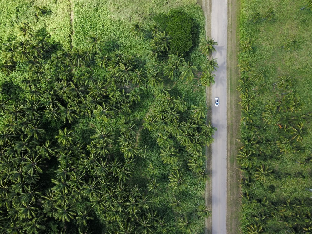 aerial photography of vehicle on grey road beside trees during daytime