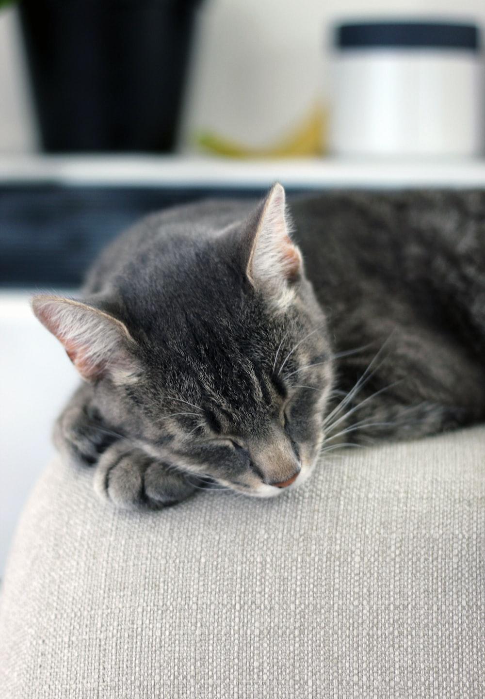 sleeping black and gray tabby cat