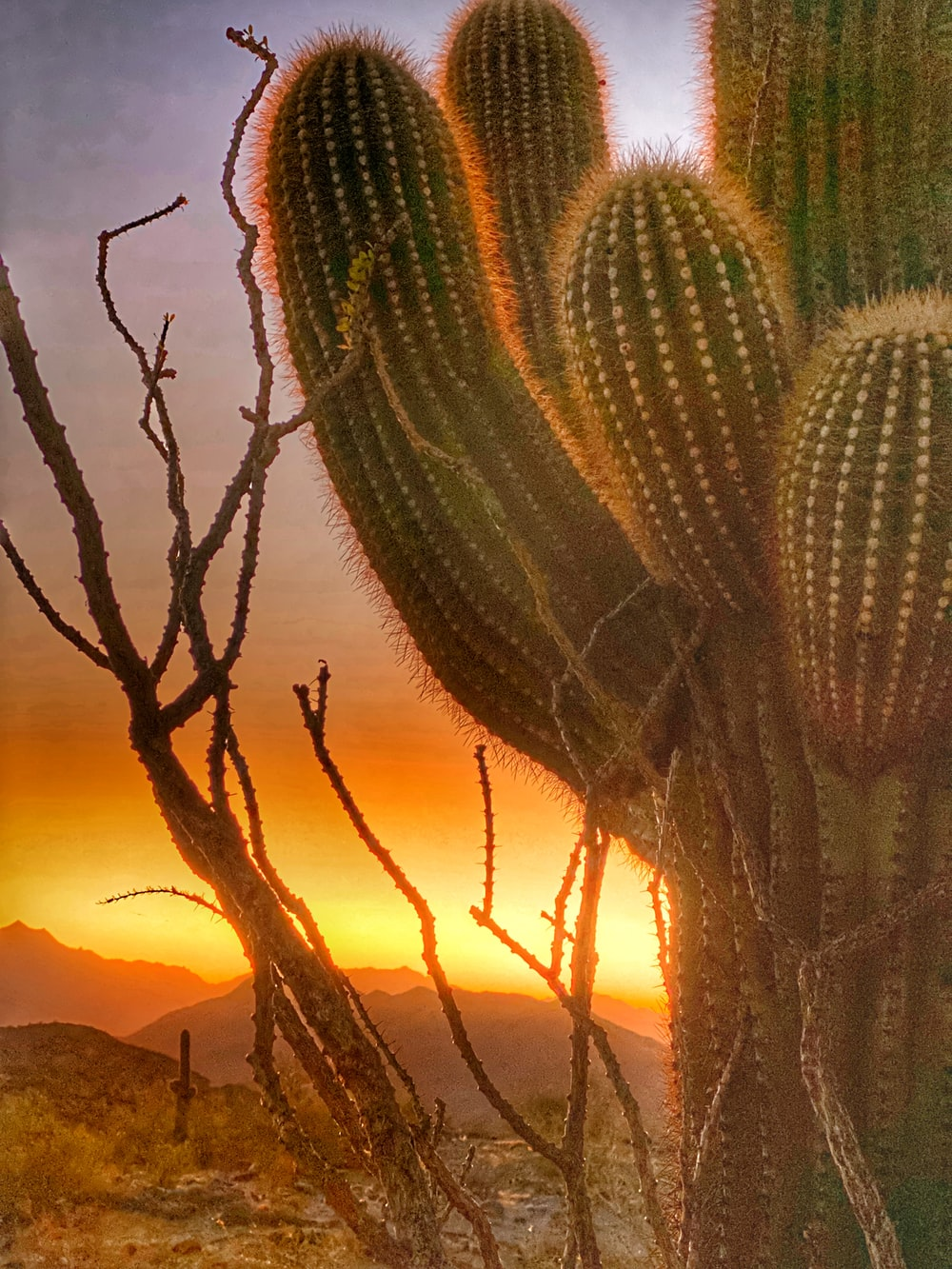 green cactus during golden hour