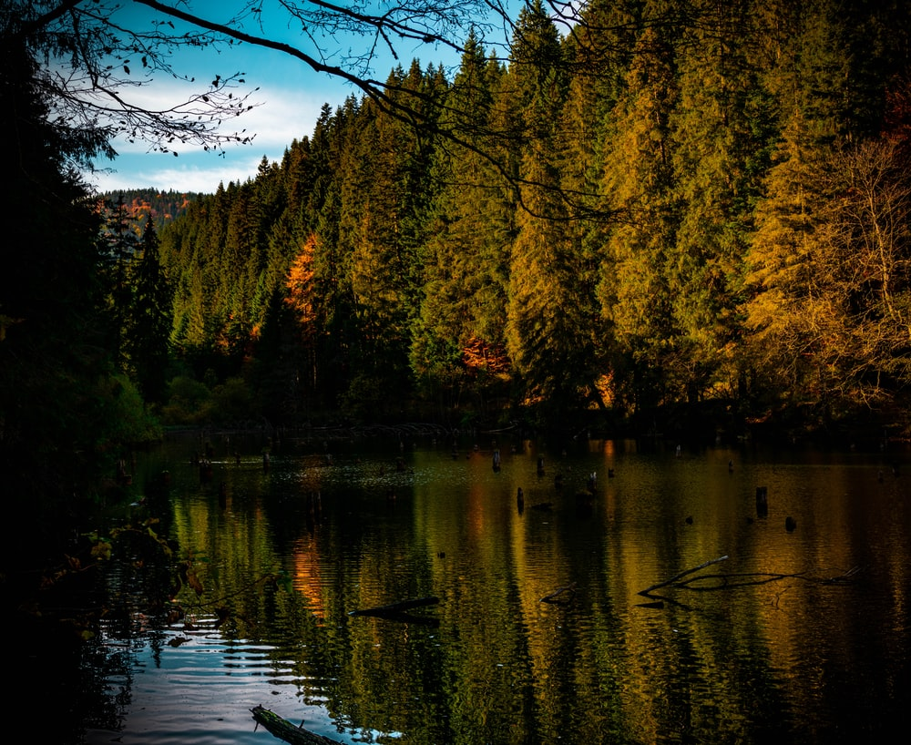 calm body of water by trees during daytime