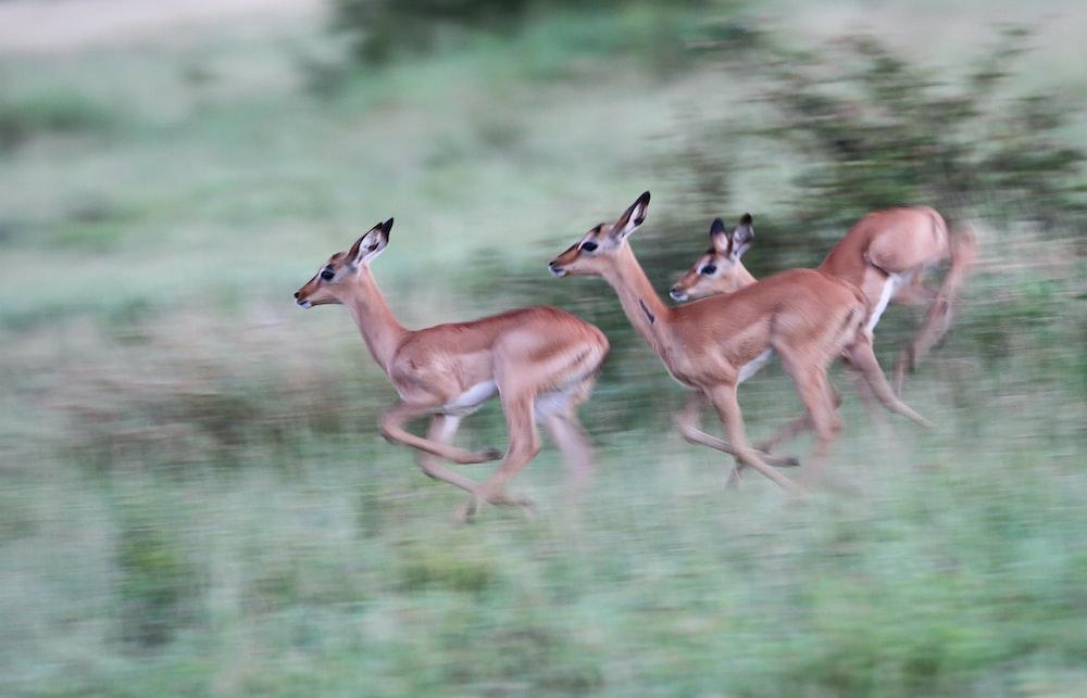 three deer running beside plants