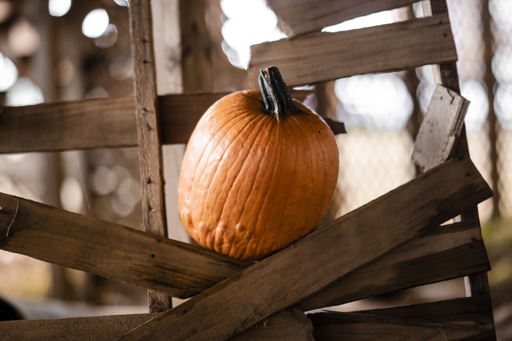 orange pumpkin on wooden frame