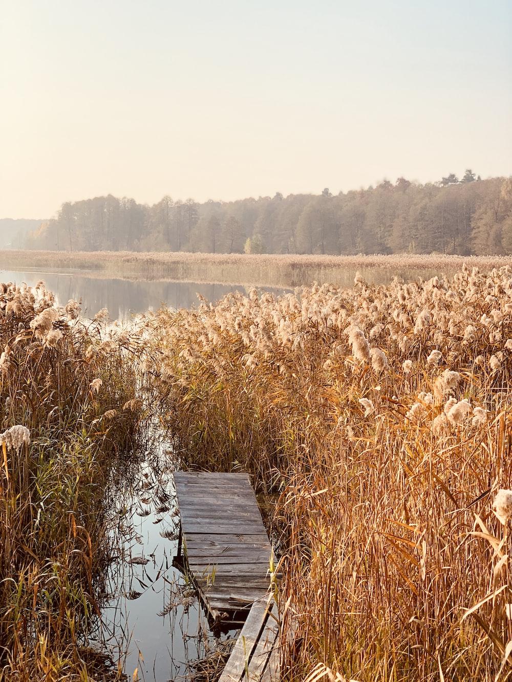 flower field beside calm body of water
