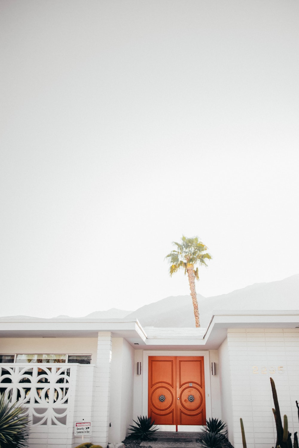 palm tree behind white house with brown door