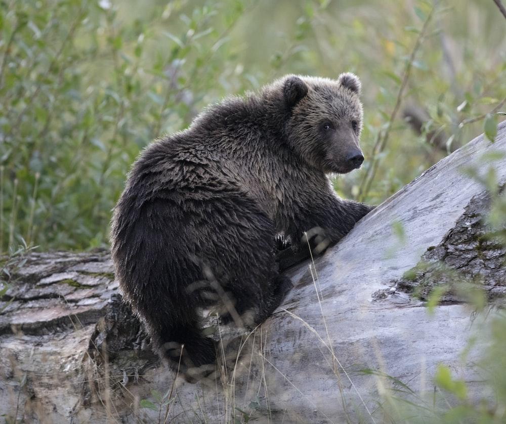 shallow focus photo of black bear