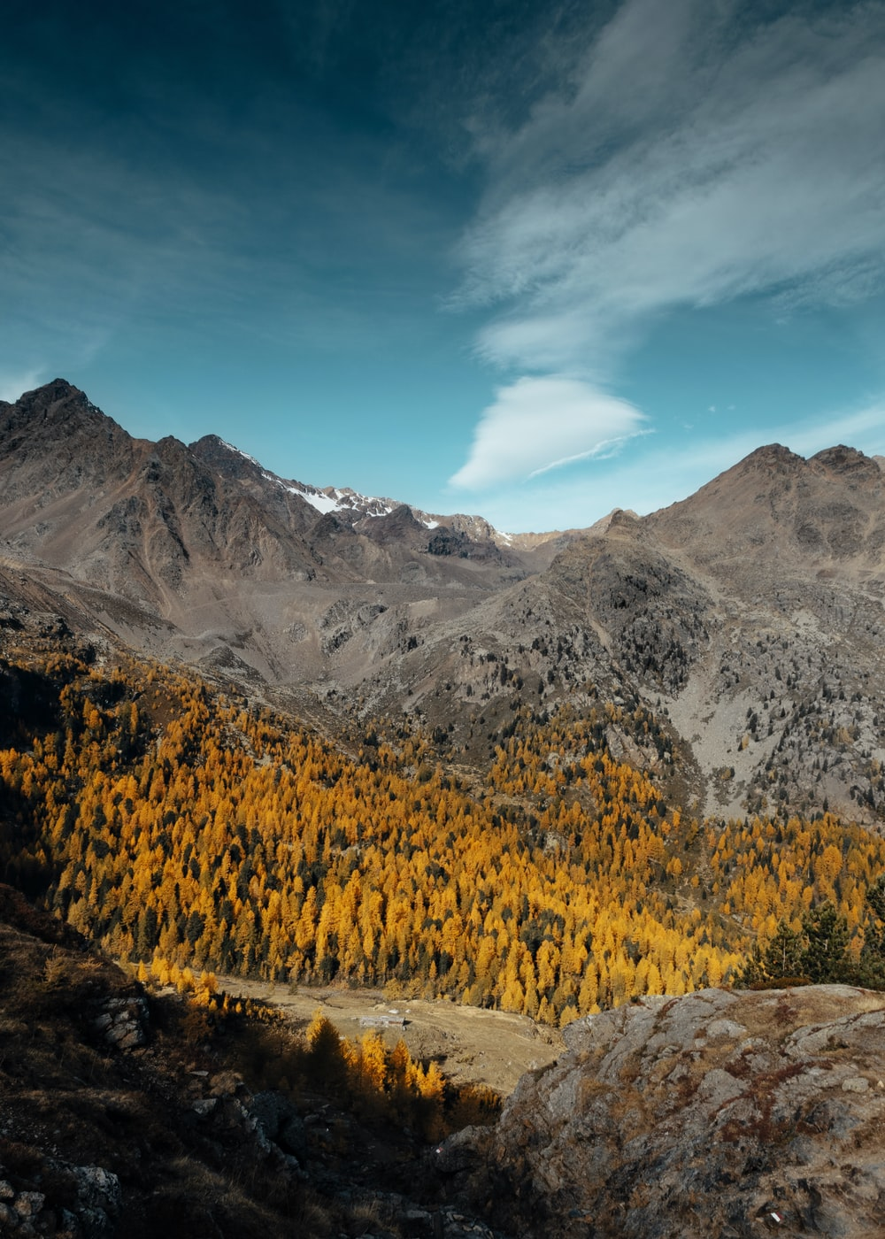trees surrounded by mountains