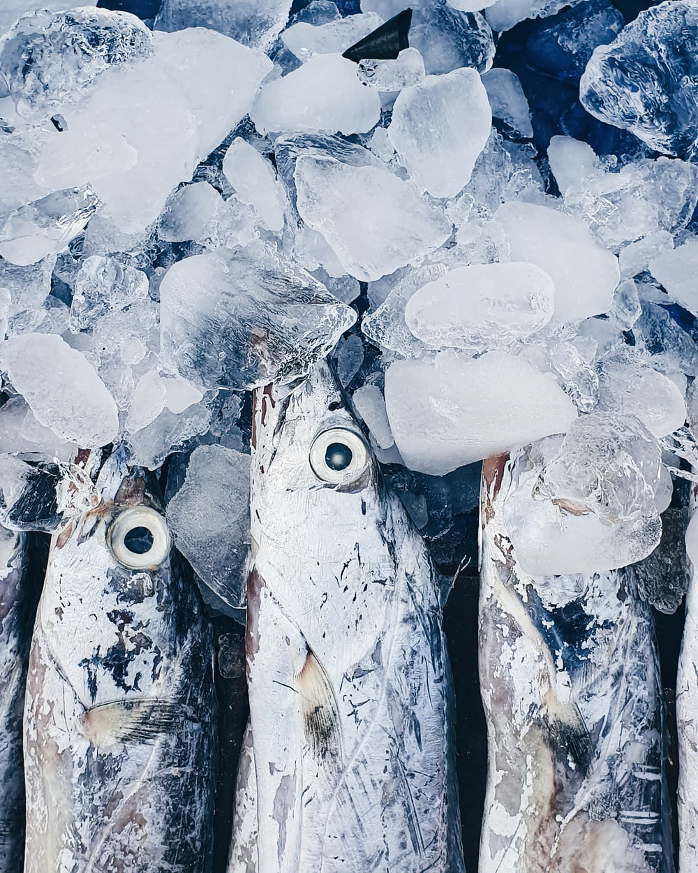 grey fish with ice