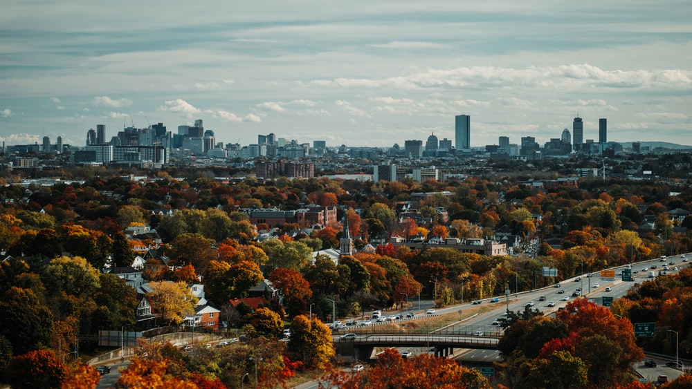 aerial photography of trees and buildings in the city