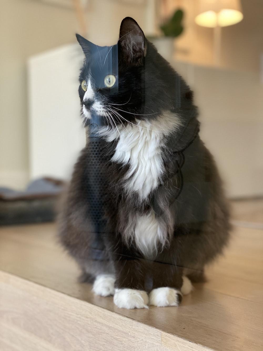 black and white tuxedo cat sitting on wooden floor