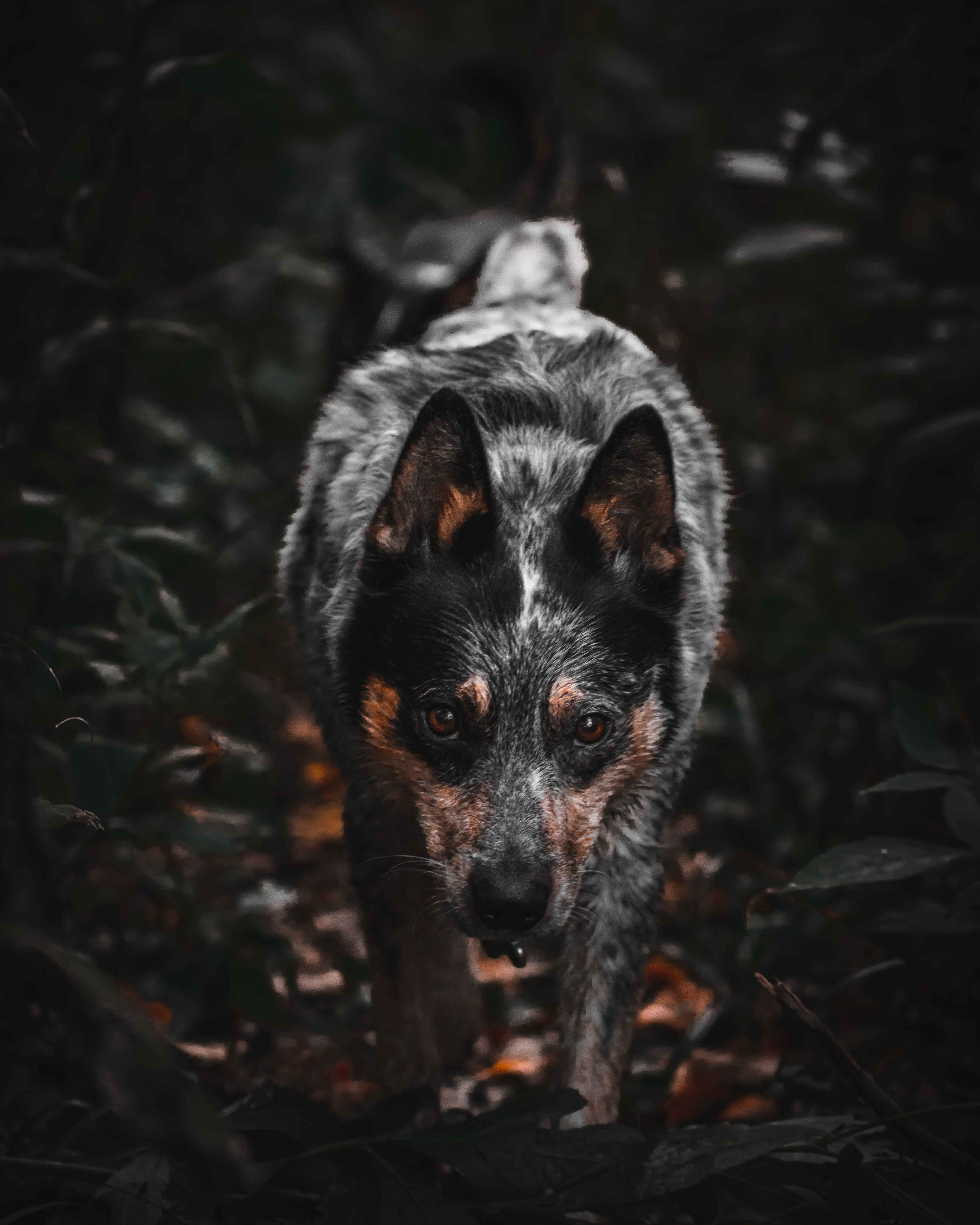 brown and black dog surrounded by leaves