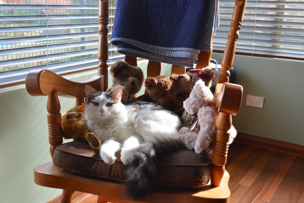 cat on rocking armchair