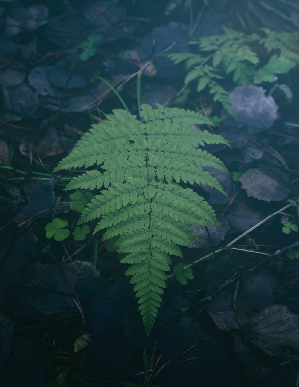 shallow focus photo of fern leaves
