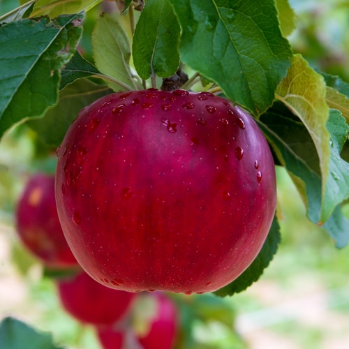 No Good Tree Bears Bad Fruit.