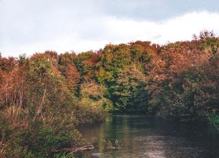 body of water between green trees