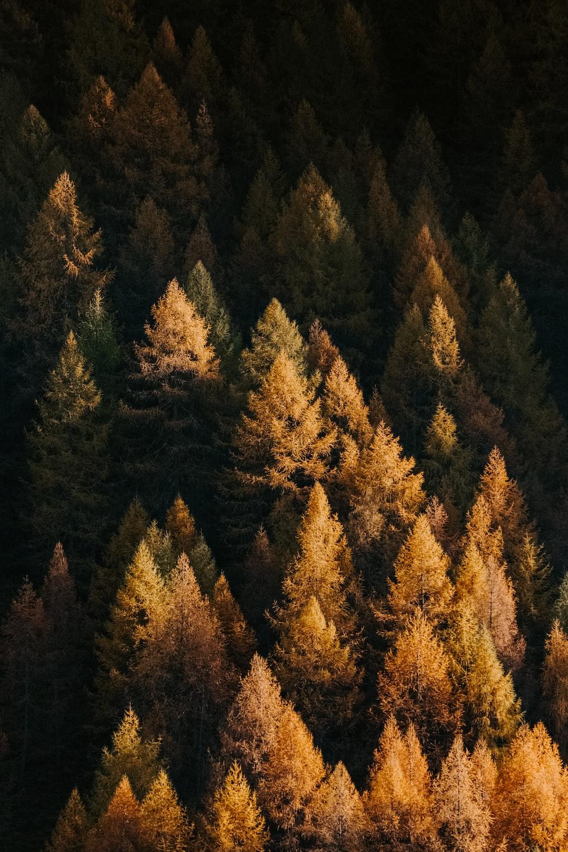 orange fern trees in a forest
