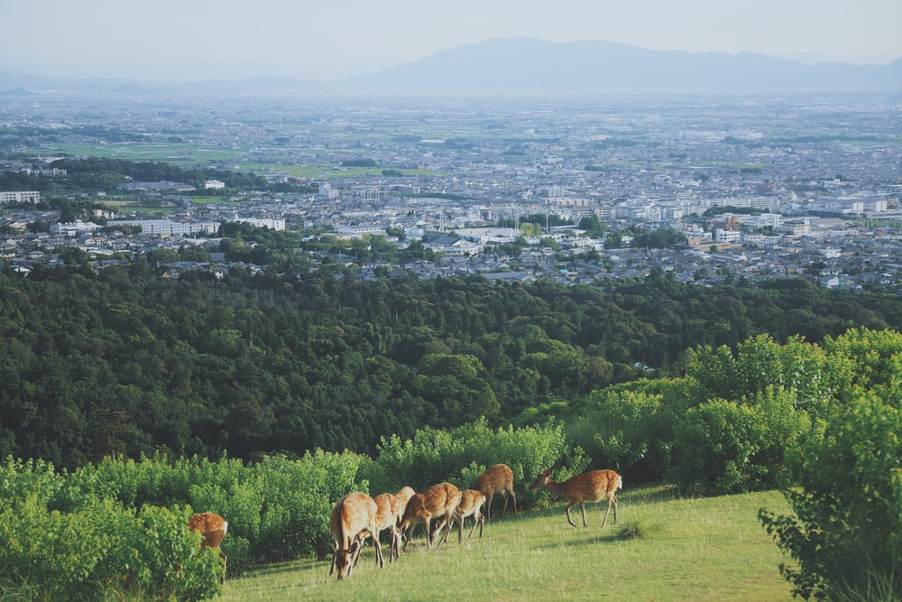 herd of deer on mountains with city overview