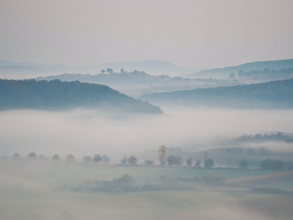 trees surrounded by fogs
