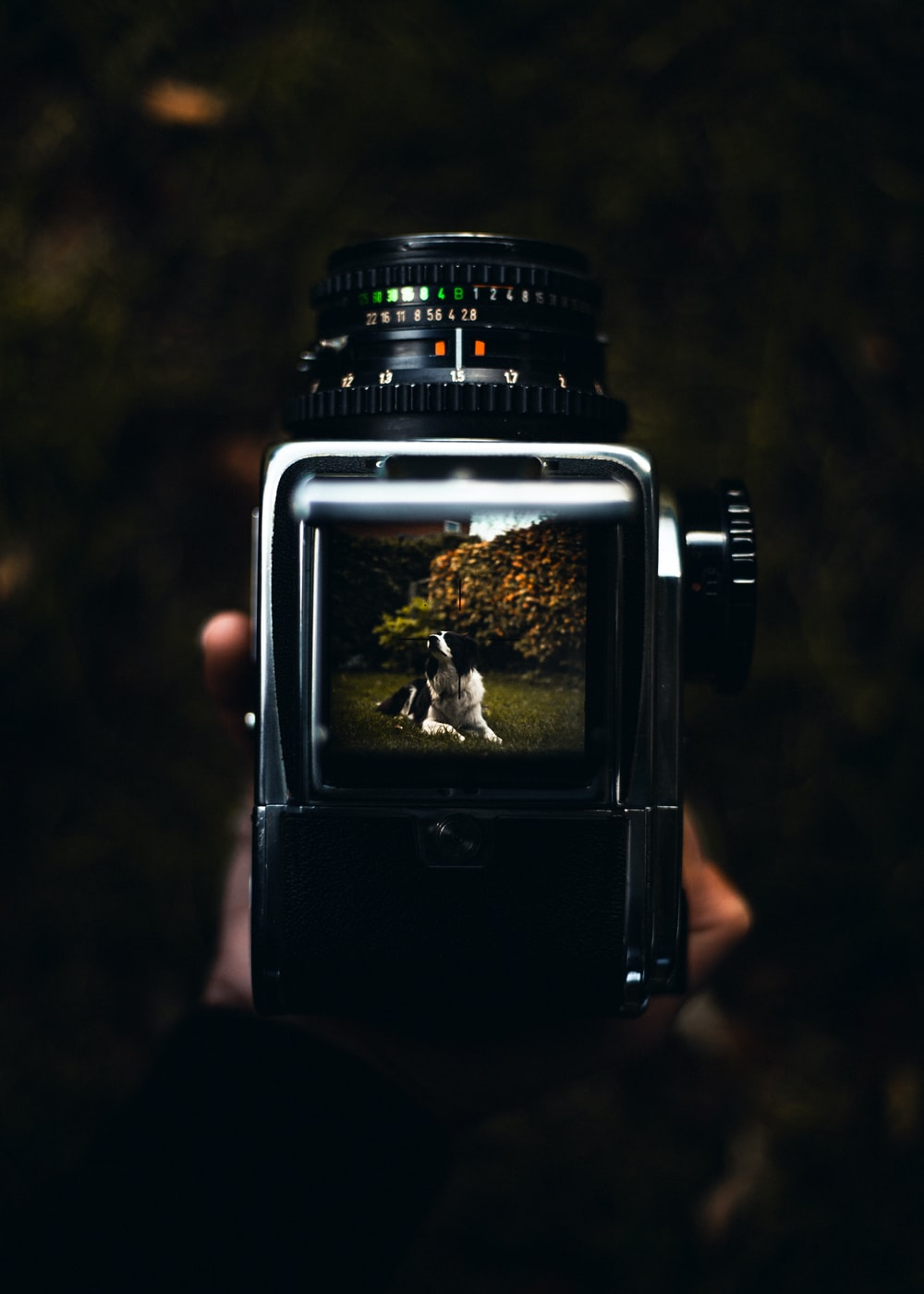 person holding black and gray land camera