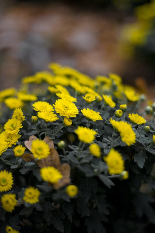 yellow flowers macro photography